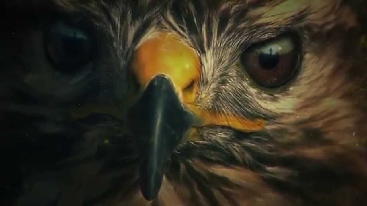 Summer Tv 2015 Zoo Cbs Intro And Title Sequence Youtube