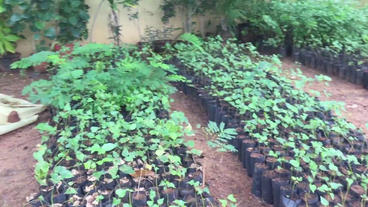 Madhavaram horticulture youtube madhavaram horticulture solutioingenieria Images