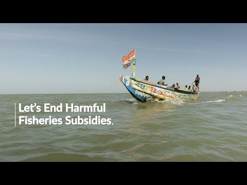 Perspective From A Senegalese Fisherman: Ending Harmful Fisheries Subsidies