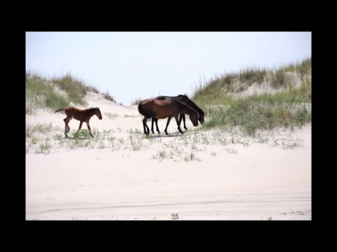 wild-horse's-corolla,-nc-outer-banks