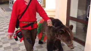 Guy brings his bear to vote at a local election.