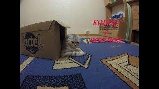 😻КОШКА В КОРОБКЕ 🐱Смешное видео про котенка 🐱Kitten playing in a box Игры с Котенком