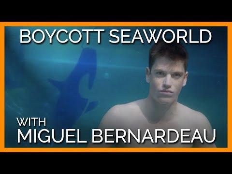 Elite Star Miguel Bernardeau Urges Fans to Boycott SeaWorld