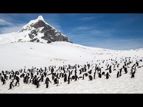 Antarctica: A Remote Continent?