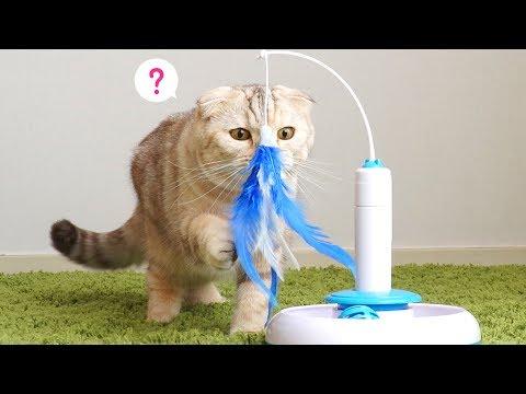 게으른 고양이 집사를 위한 꿀 아이템!