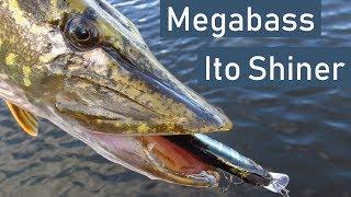 Обзор воблера Megabass Ito Shiner