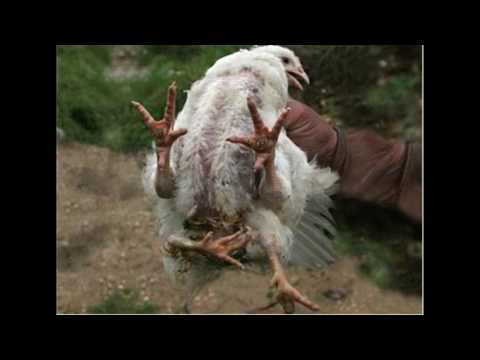 fda-shuts-down-kfc-after-raid-finds-cloned-and-mutated-chickens-on-farm..-maybe-fake
