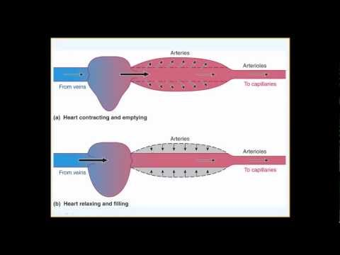 The blood vessels and blood pressure physiology (part I of 2)