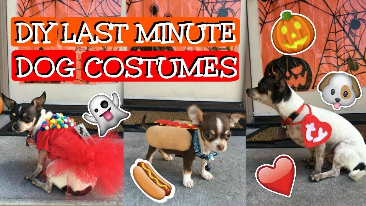 DIY Willy Wonka Dog Costume by AMMA Dog lovers