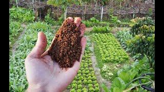 Только после этой подкормки всё растёт в огороде и буквально заваливает урожаем!