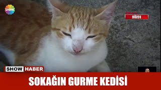 Sokağın gurme kedisi