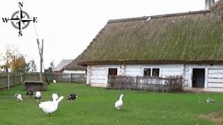 [HD] Muzeum Wsi Kieleckiej w Tokarni - kozy, owce i zwierzęta hodowlane