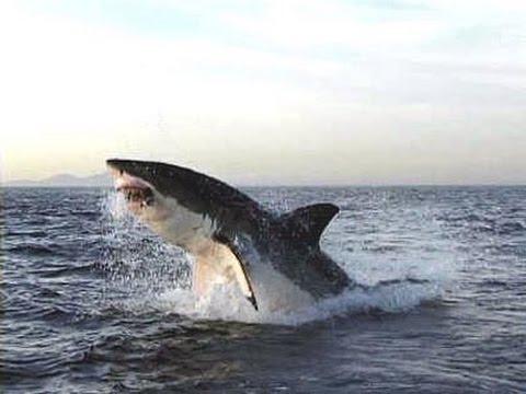 рейтинг 10 самых опасных акул. Документальный фильм. Часть 1