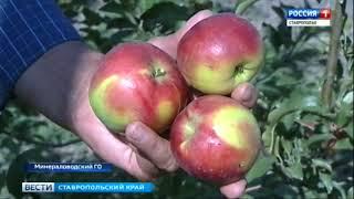 Сады под ключ. На Ставрополье развивают суперинтенсивное садоводство