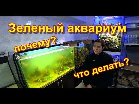 Зеленый аквариум. Почему, что делать?