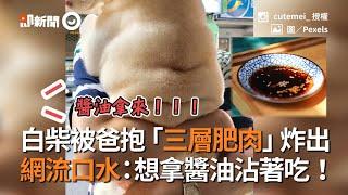白柴被爸抱「三層肥肉」炸出 網流口水:想拿醬油沾著吃 !