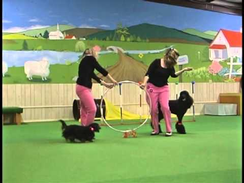 Canine Musical Freestyle: Pairs Routine - 'Dancing with the Band'