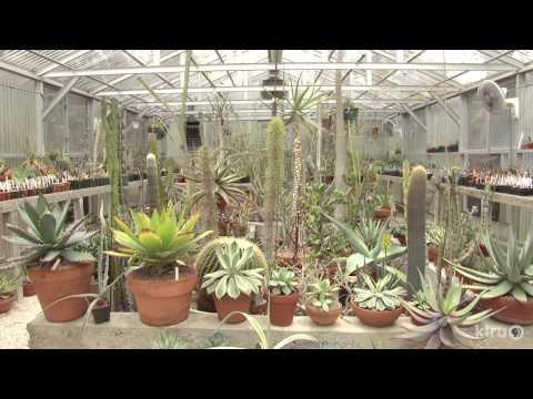 Cactus and succulent garden and greenhouses | Bob Barth | Central Texas Gardener