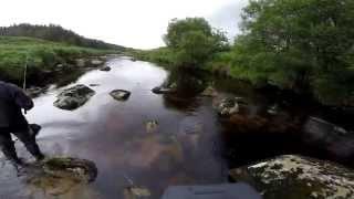 Ловля форели на речке в Ирландии. Trout fishing in Ireland..