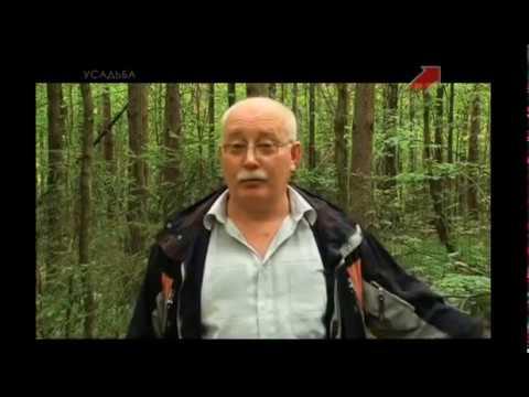 Сбор лисичек в лесу, рекомендации по сбору лисичек, Усадьба, Тихая Охота