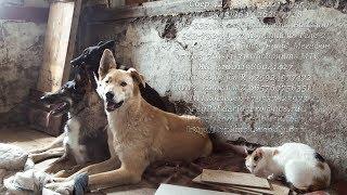 Рушится дом в котором живут бездомные собаки и кошки Помогите животным Спасите их приют.