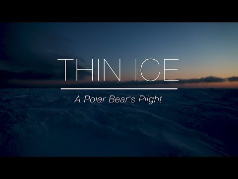 Thin Ice: A Polar Bear's Plight