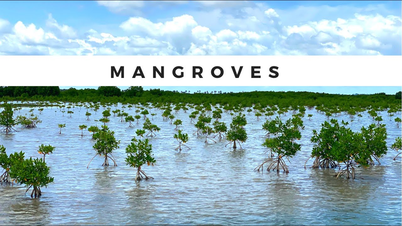 Mangrove Forests
