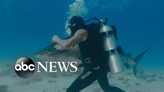 Testing a 'shark suit' that lets divers get up close without case l Nightline