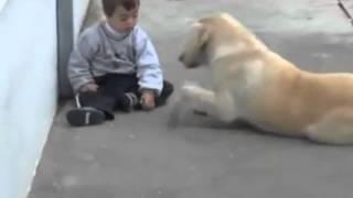 Трогательное видео о дружбе ребёнка с собакой