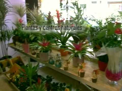 Jardinama centro de jardiner a madrid youtube - Centro de jardineria madrid ...