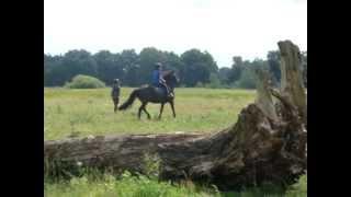 Детский лагерь в Польше - кони 3