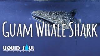 Liquid Soul - Guam Whale Shark