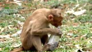 Лучшие приколы с участием обезьян
