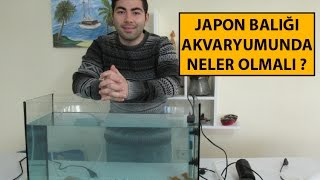 Japon Balığı Akvaryumu Nasıl Olmalı | Akvaryum Maliyeti