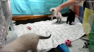 Gaia's Kittens: A Time lapse