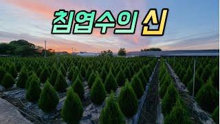 국내최초! 2022 침엽수 트렌드 LIVE