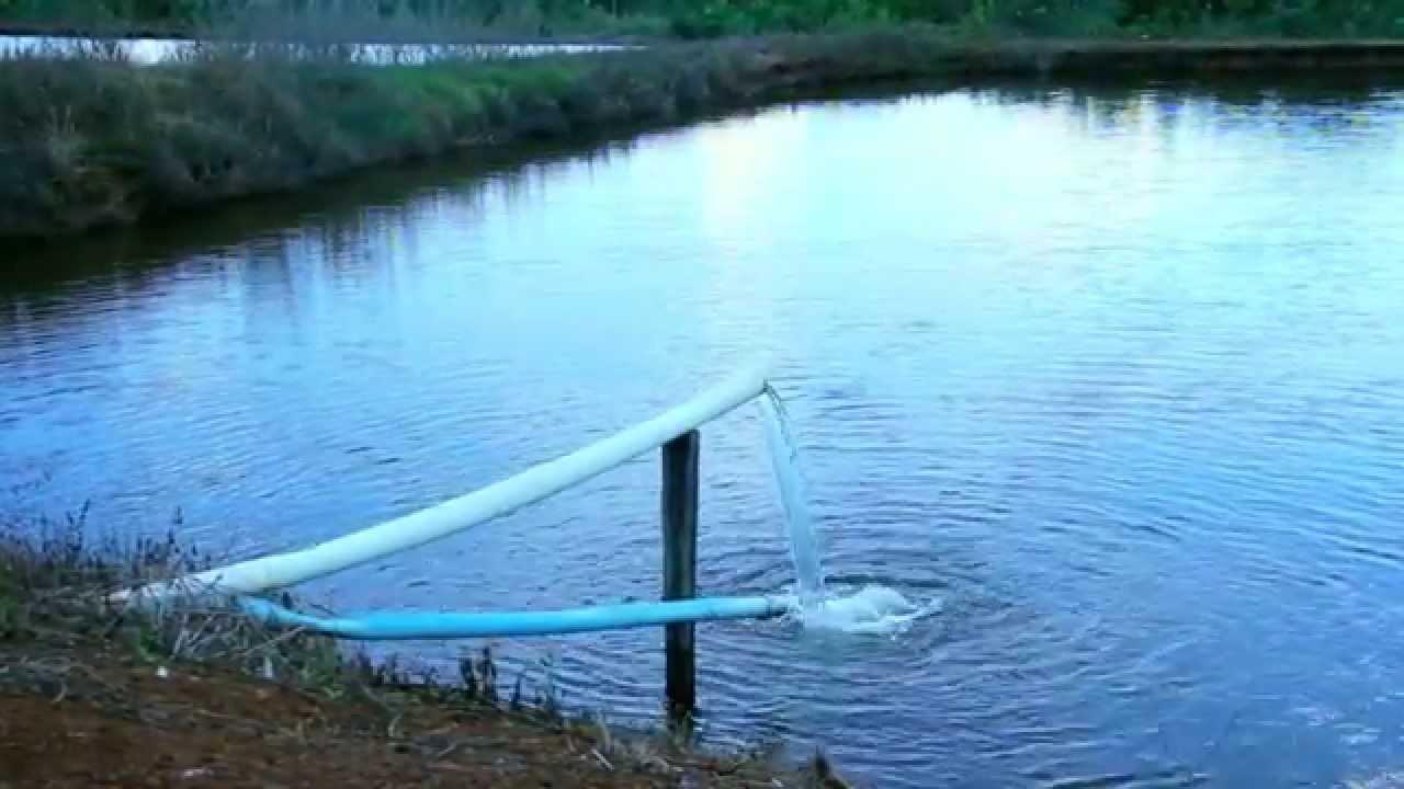 constru o de tanques para piscicultura youtube On tanques plasticos para piscicultura