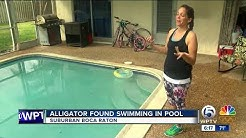 Boca Raton family finds 8-foot alligator in pool