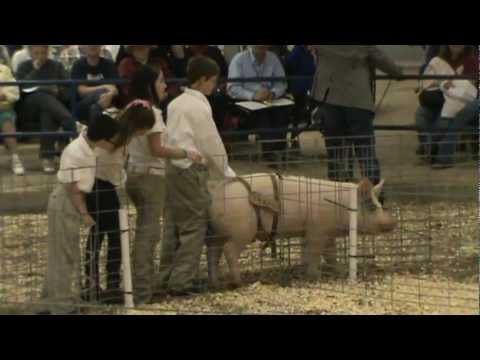 Shady Hill Elementary School 4-H and Peanut the Pig 2012