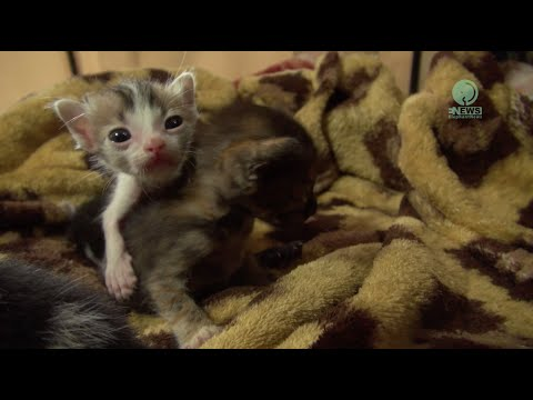 Rescued orphaned 4 Kittens and 1 Squirrel