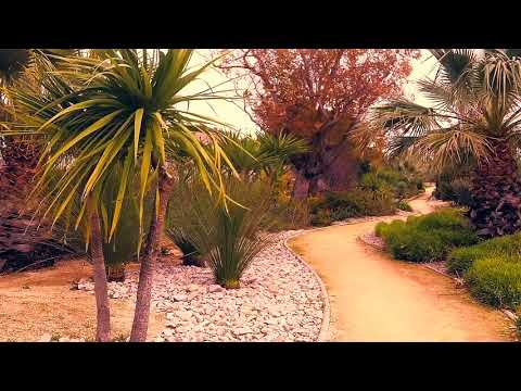 The exotic garden - The little path Romantic dream - Natural ambient sounds