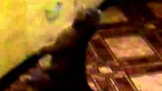 Кошка встаёт под гимн России