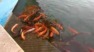 God fish...