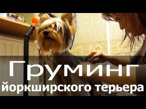 Как сшить комбинезон для собаки. Выкройка комбинезона для