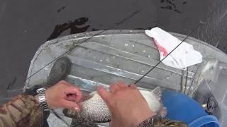 Рыбалка сетями . Весенняя ловля рыбы сетями на болоте.