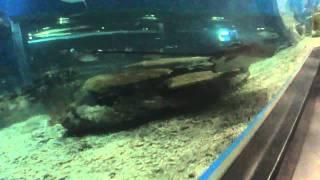 Ocean Park Manila Video #5