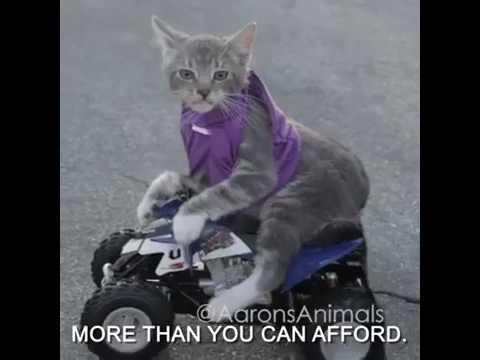 Katze Fährt Motorrad