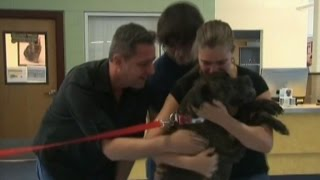 After Nine Years, Long-lost Dog Reunites With Alabama Family