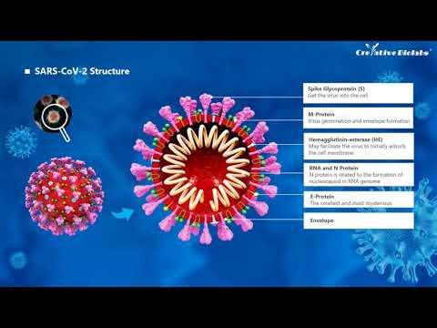 SARS-CoV-2 Introduction - Creative Biolabs