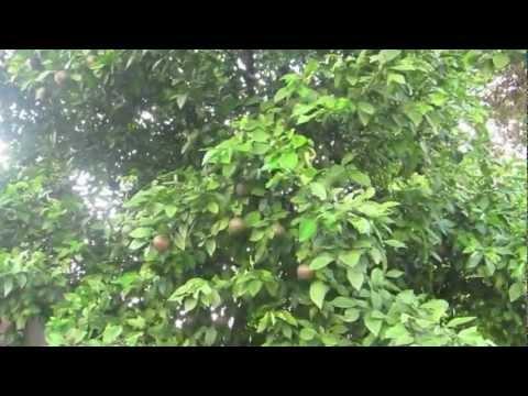 Vườn Cây Trái Houston, Texas